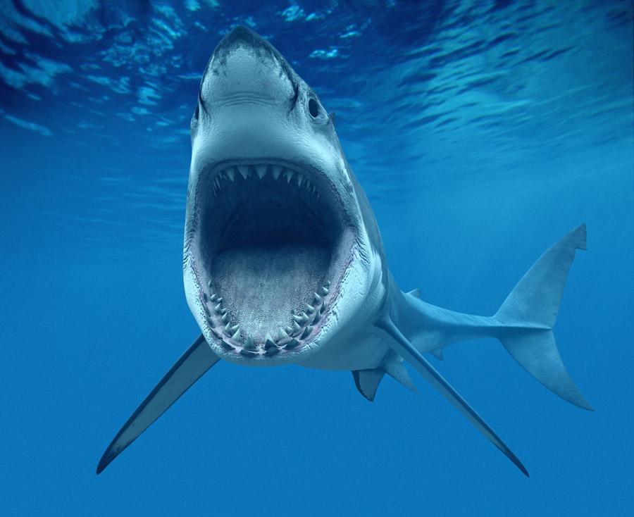 世界最大的海底动物
